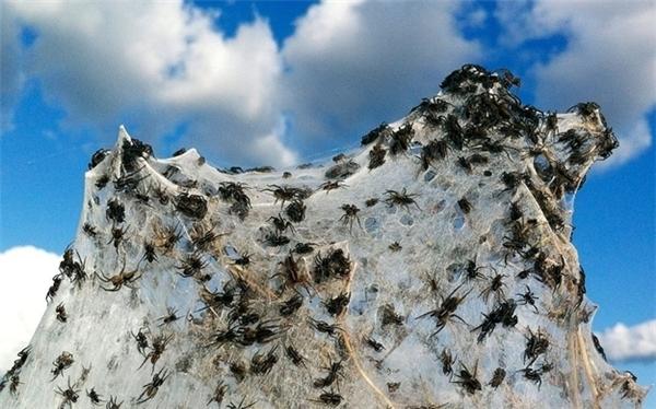 Nhện. Có rất nhiều nhện.