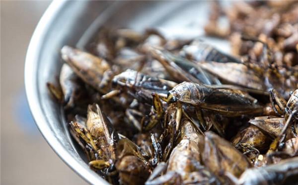 Ẩm thực Campuchia - Ghé chợ côn trùng, thử lòng can đảm
