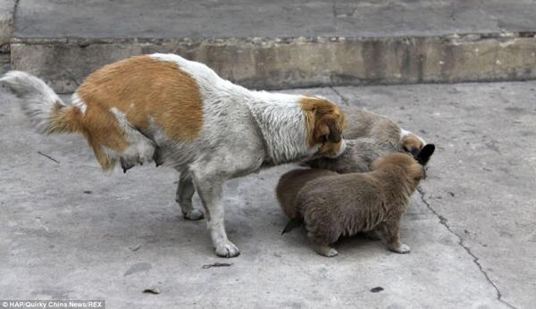 Si Bao thương yêu chăm sóc và bảo vệ các con mình từng giây từng phút.