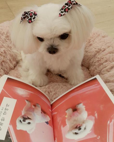 Vàthích đọc sách về các loài chó.