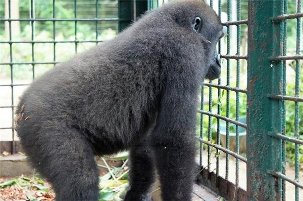 Thế là Parry được đem đến một khu bảo tồn động vật và bị cách li một thời gian.