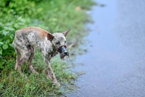 Hình ảnh chú chó nhỏ bị quấn băng keo ở mõm đi lang thang gây chấn động dư luận.