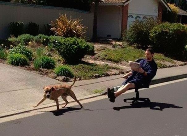 Chó cưng cần vận động chứ mình thì chỉ cần ngồi thong thả đọc báo thôi.