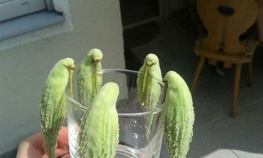 Trả lời nhanh: Là chim hay là một loại quả nào?