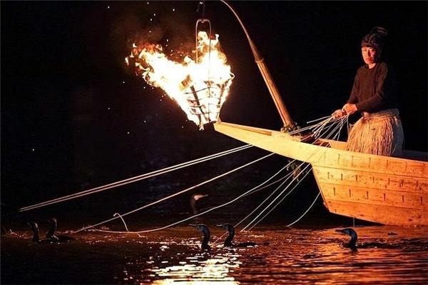 Nhóm ngư dân sẽ chèo một chiếc thuyền gỗ dài, buộc khoảng 12 con chim cốc đang lặn dưới nước.