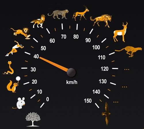 Đạt vận tốc tới 120 km/h, báo Cheetah là loài vật chạy nhanh nhất trên mặt đất. Tuy nhiên, để chạy được với tốc độ đó đòi hỏi rất nhiều năng lượng, nên chúng chỉ có thể duy trì được tốc độ cao như vậy trong khoảng 30 giây.