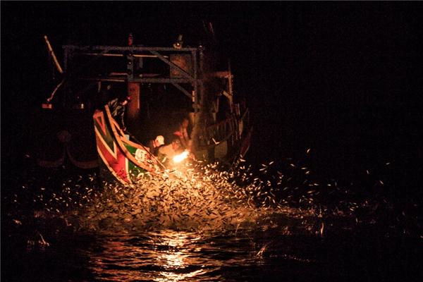 Sau khi cá tập trung lại, ngư dân sẽ dùng lưới kéo lên. Theo hiệp hội ngư nghiệp, số lượng thuyền đánh cá trước đây là 300, nhưng ngày nay giảm xuống chỉ còn 3 chiếc.