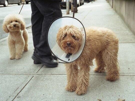 Cười cợt trên nỗi đau khổ của người khác chắc là vui lắm.