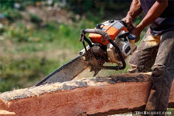 Nghề đốn gỗ hay nói rộng ra là những người làm trong ngành lâm nghiệp nằm trong nhóm nghề có số ca tử vong gia tăng trong những năm gần đây.