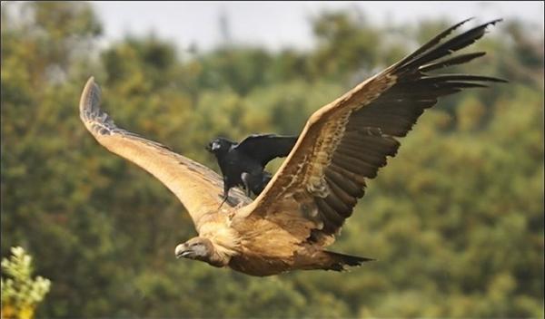 Trời sinh ra con chim có đôi cánh nhưng cũng có những lúc nó không muốn bay chứ.