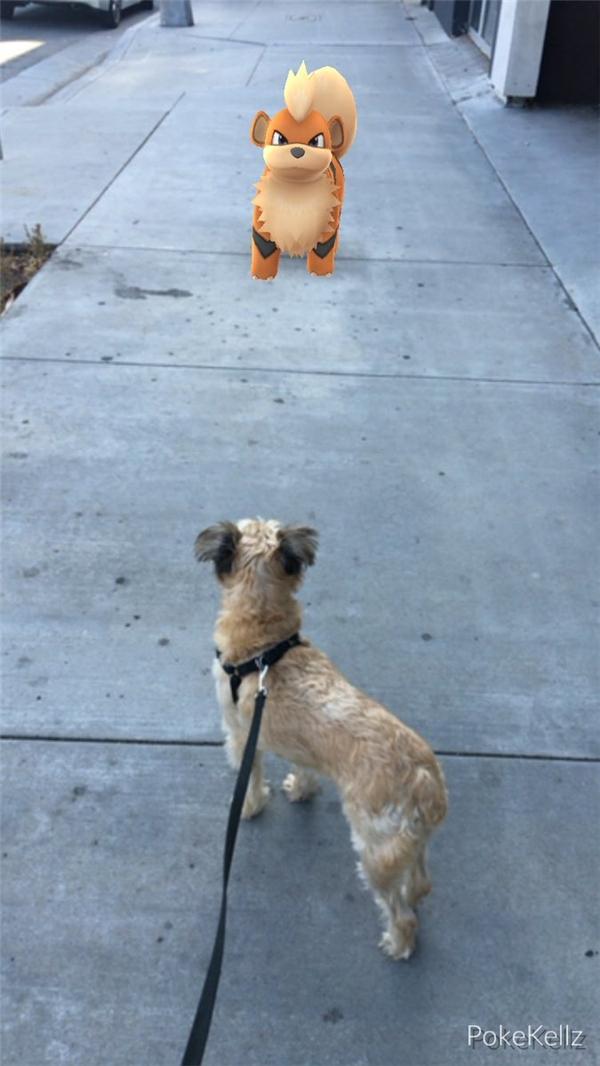 Con Pokemon đấy, nó... nhiều lông hơn mình kìa!