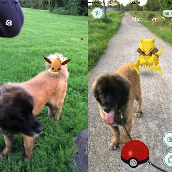 Em cún này giỏi thật, dẫn về được biết bao nhiêu là Pokemon này.