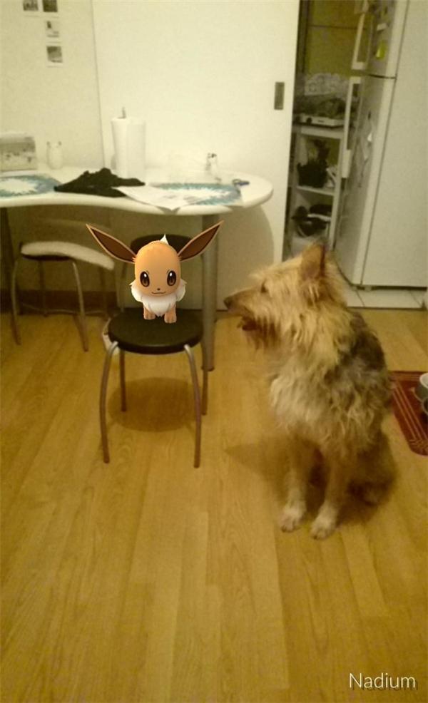 Em Pokemon nàythật là biết chọn chỗ để ngồi.