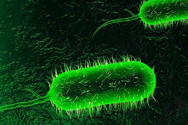 Bệnh tả do vi khuẩn tả gây ra và có thể lây lan.