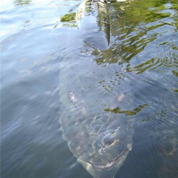 Liệu bạn có dám xuống nước khi nhìn thấy con này?