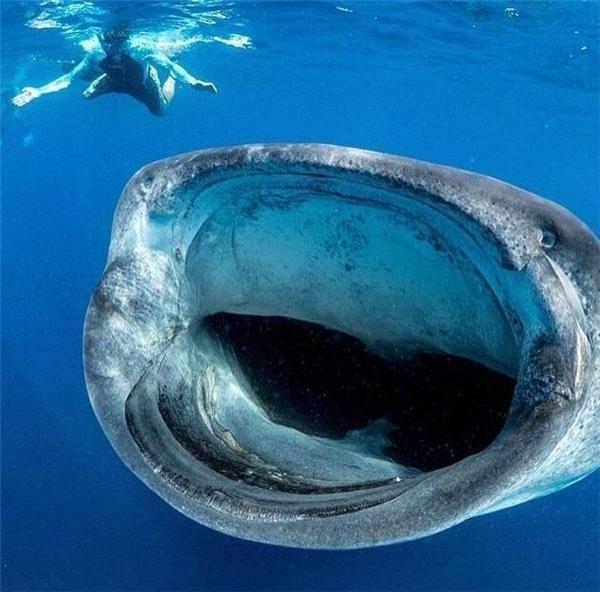Thử thách sự can đảm của các thợ lặn.
