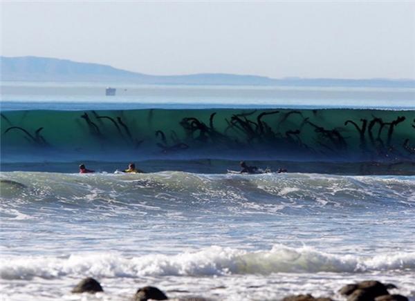 Con sóng kinh hoàng...