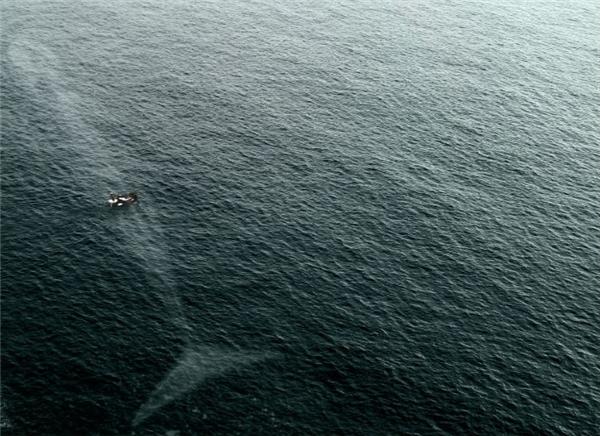 Những người trên chiếc tàu kia sẽ cảm thấy may mắn khi thấy được bức ảnh này.