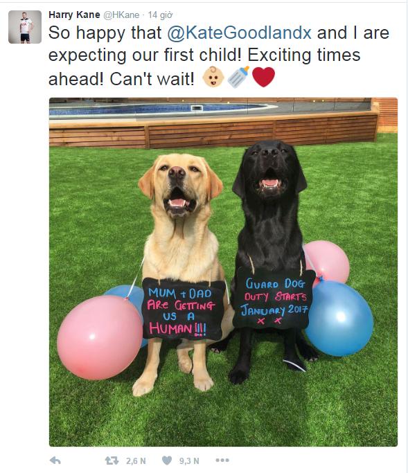 Bố mẹ sắp đem đến cho gia đình mình một thành viên nữa!!! Nhiệm vụ của những chú chó bảo vệ sẽ bắt đầu vào tháng 1 năm sau XX.