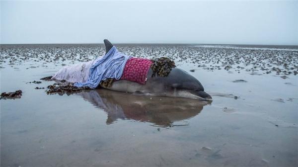 Xót xa trước vết thương cháy nắng khủng khiếp trên lưng cá heo