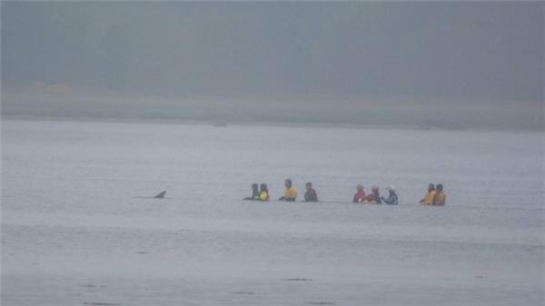 Công cuộc giải cứu Spirtle và đưa nó về biển kéo dài đến 12 giờ.