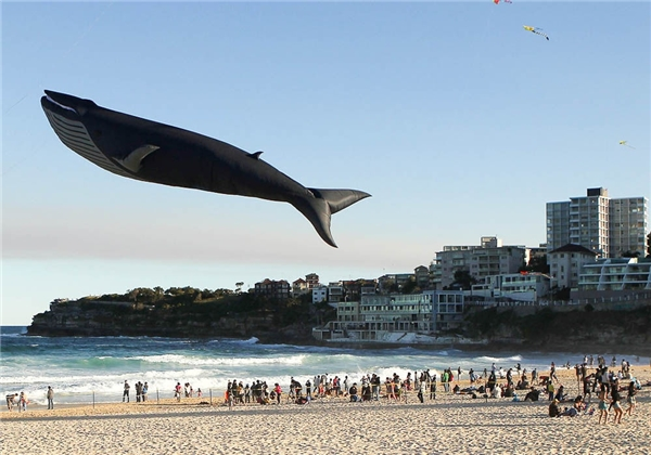 Cá voi biết bay ư? Bạn lầm rồi, đó là bong bóng cá voi.