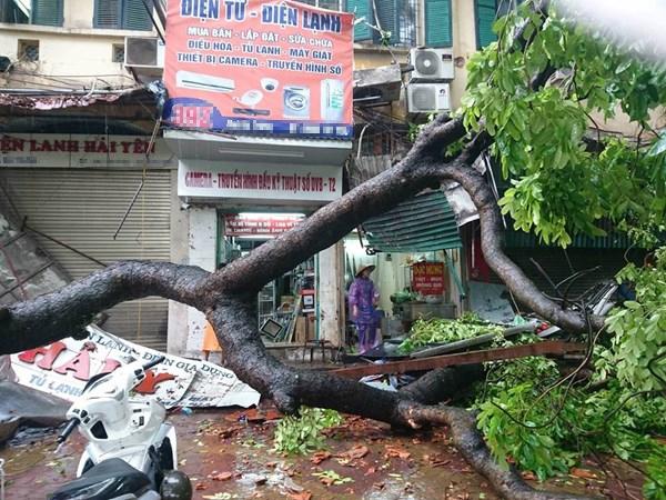 Cây xanh, cột điện gãy đổ gây ra những tai nạn đáng sợ có thể gây nguy hiểm đến tính mạng con người.