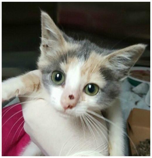 Thật may mắn vì chú mèo đã được chữa trị kịp thời.