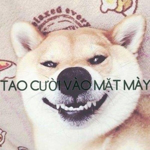 Em panda à, cho anh mạn phép cười vào mặt em 1 giây thôi... (Ảnh Internet)