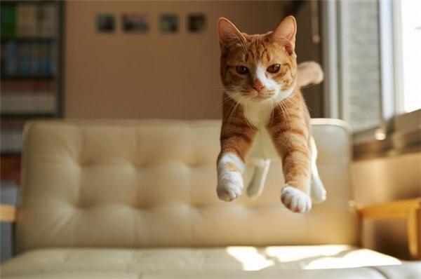 """Tấm ảnh gây chấn động """"cộng đồng mẹo"""": mèo biết bay."""
