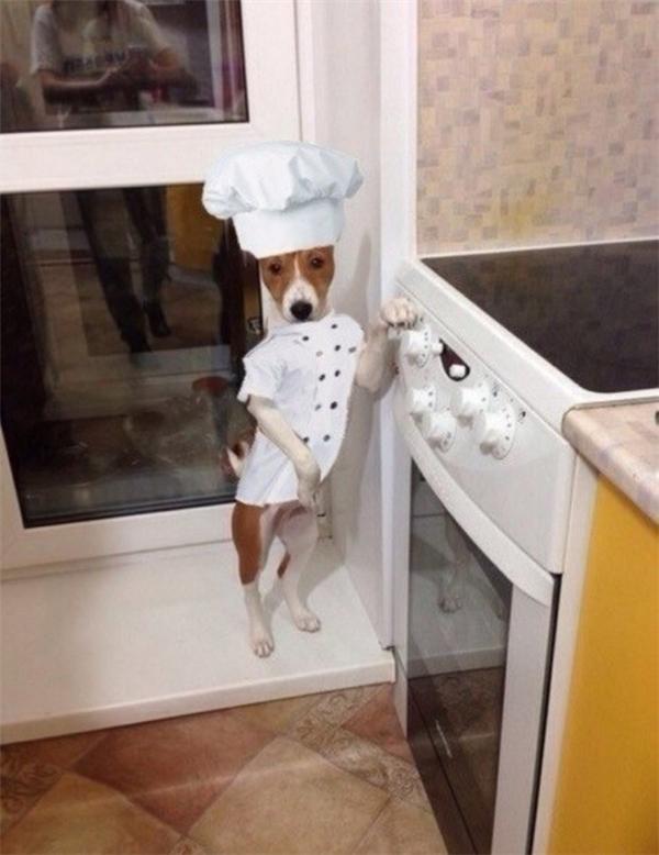 Nào, các chú muốn ăn gì để anh nấu?