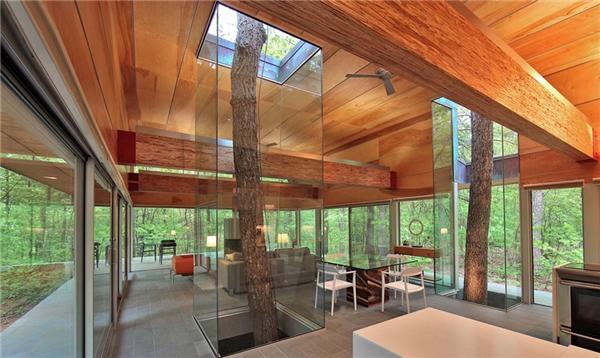 """Chủ nhà yêu thiên nhiên đến mức ưu ái xây riêng """"lồng kính"""" để trưng bày 2 cây cao."""