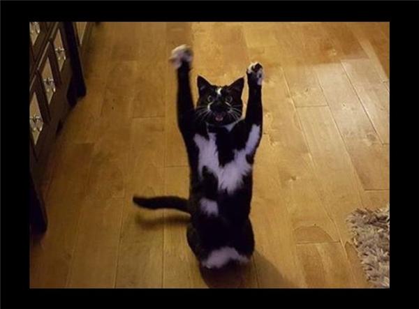 Hành động kì lạ, chú mèo trở thành