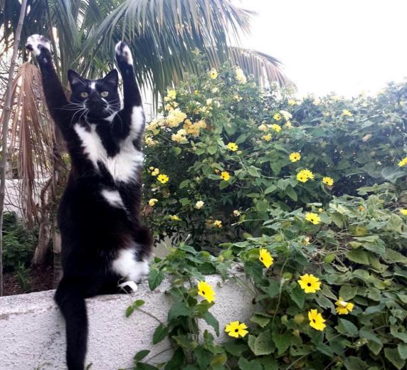 Peter vô tình phát hiện chú mèo ông nuôi có hành động kì lạ rất đáng yêu.
