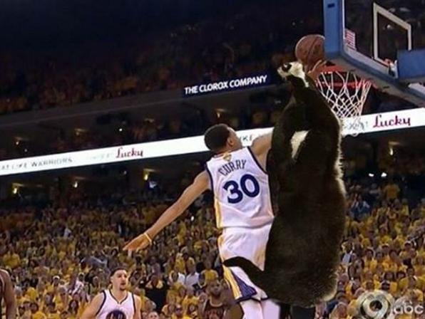 Cầu thủ bóng rổ Tuxedo tài ba.