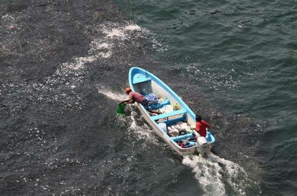 Hiểm họa tiềm ẩn của vệt đen trên biển khiến nhiều du khách bỏ chạy