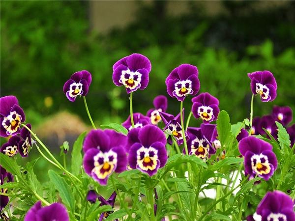 Chị em nhà hoa hòe cùng cười nào.(Ảnh: Internet)
