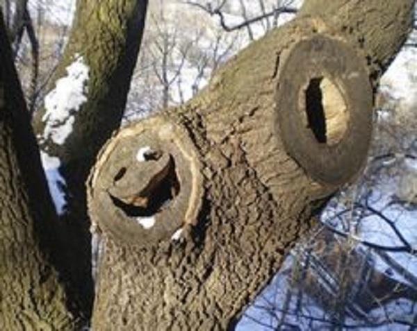 Sống trên cao, nhìn xuống thiên hạ và cười khoái trá.(Ảnh: Internet)