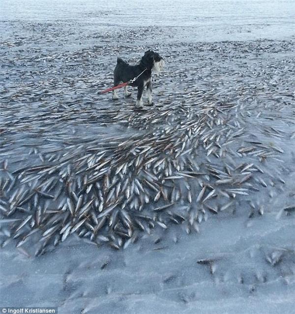Đàn cá đã không chạy thoát được cơn bão tuyết.