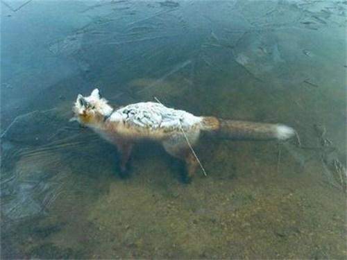 Chàng trai trượt băng trên mặt hồ và phát hiện cảnh tượng kinh hoàng