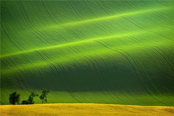Đồi Rolling ở Nam Moravia là một trong những cảnh tượng ngoạn mục nhất thế giới. Ngọn đồinhư được trải những tấmthảm xanh mướt,chải chuốtmượt mà bởi bàn tay của tạo hóa.