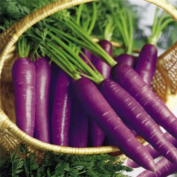 Cà rốt vỏ tím do ảnh hưởng của sắc tố anthocyanin đã có mặt từ thế kỉ10 tại La Mã và Trung Á, dù vậy bên trong nó vẫn có màu cam.