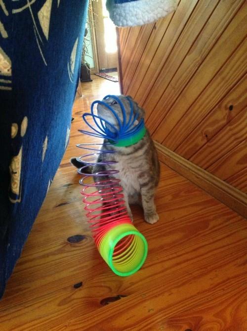Mèo ơi saoem nghịch dại thế.