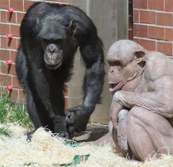 Đa số thời gian Mongo vẫn rất thân thiện và có tiếp xúc với đồng loại của mình.