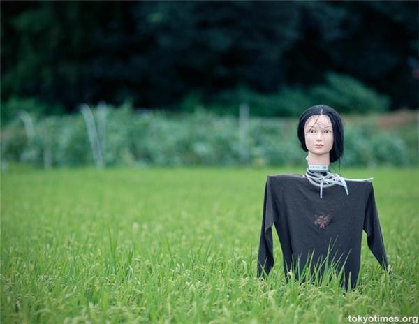 Người Nhật dùng đầu ma nơ canh rũ rượi làm bù nhìn