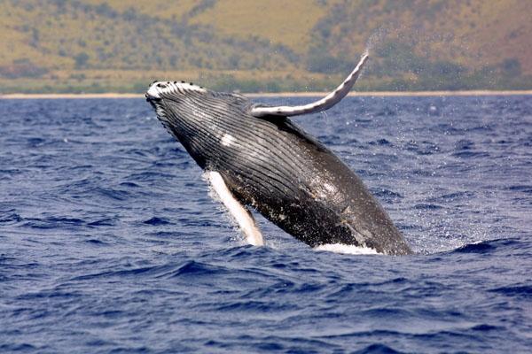 Nghi vấn thủy quái khổng lồ xuất hiện giữa biển khơi?