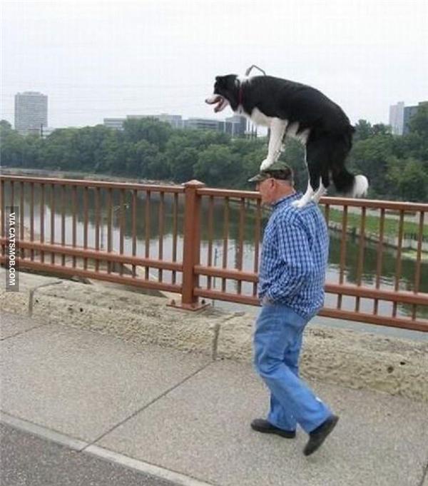 """Bởi vì chó là """"ông nội"""" của chủ mà."""