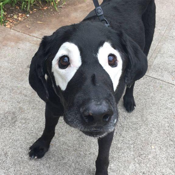Gương mặt ngây thơ vô tội của Rowdy với hai vùng trắng quanh mắt ngộ nghĩnh.