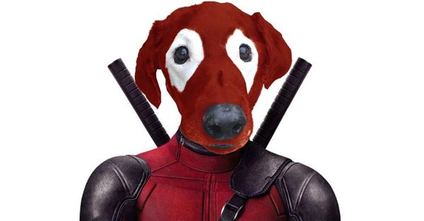 Dogpool này có thật hơn không.
