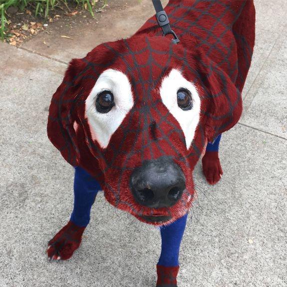 Spiderdog.